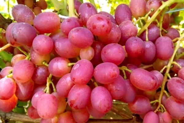 кисти ягод