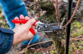 Инструкция по обрезке винограда осенью