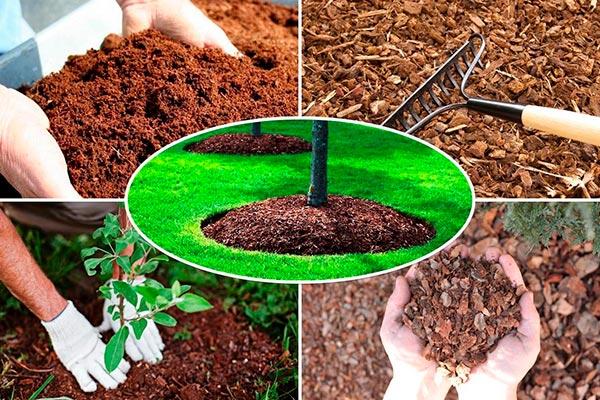 защита дерева мульчированием