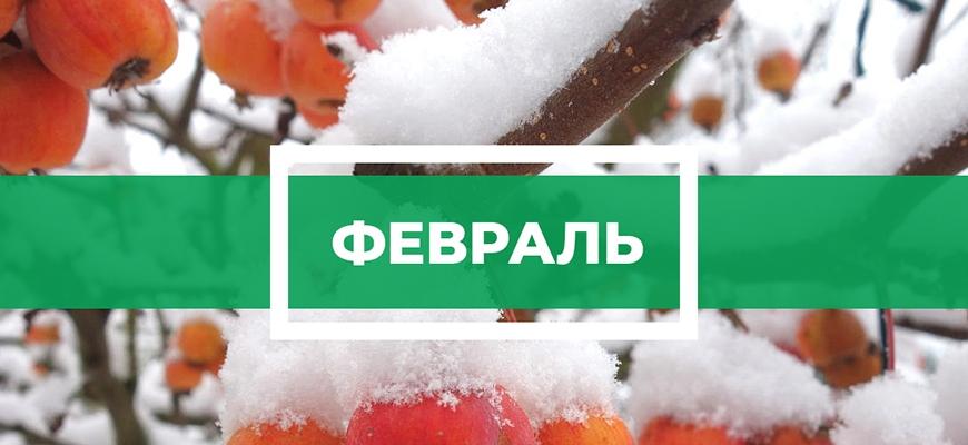 Календарь садовода на февраль