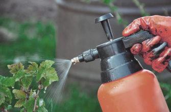 Как обработать красную и черную смородину осенью