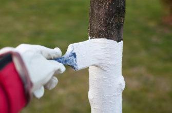 Как покрасить или побелить дерево осенью