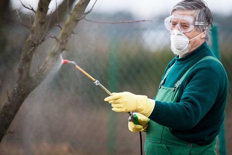 Обработка дерева от вредителей перед побелкой