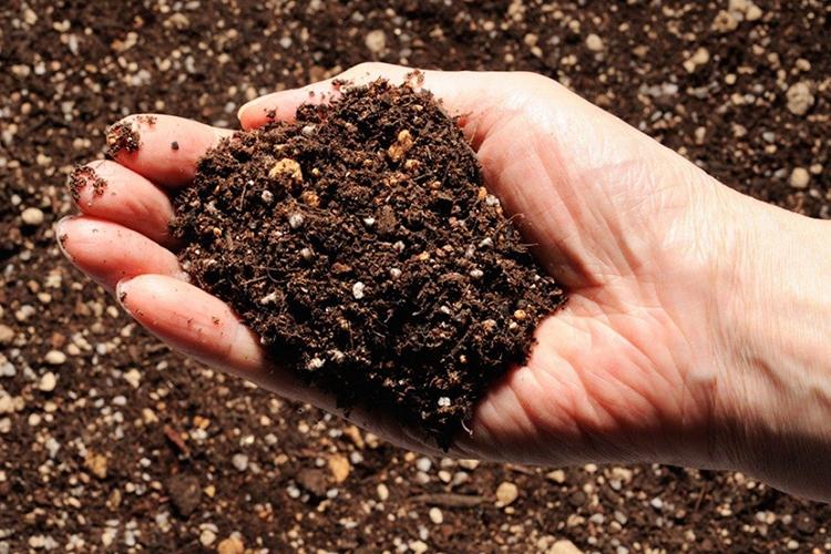 Подготовка почвы под вишню