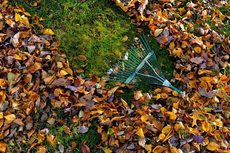 Что делать в ноябре в саду и огороде