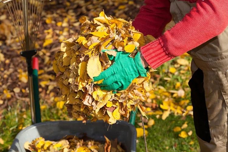 Уборка в саду осенью