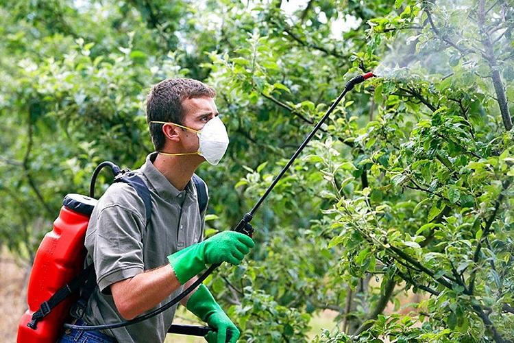 Обработка яблонь от болезней