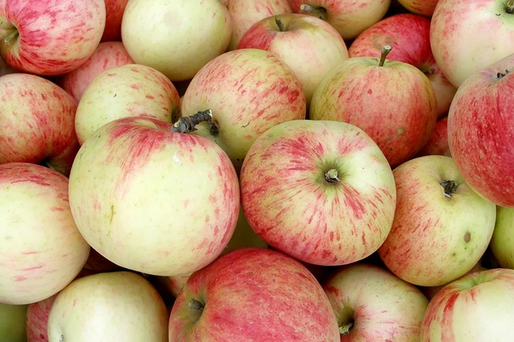 Достоинства и недостатки сорта яблок Коричное полосатое