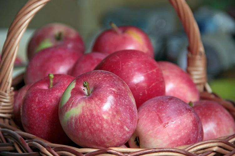 Достоинства и недостатки яблони Слава Победителям