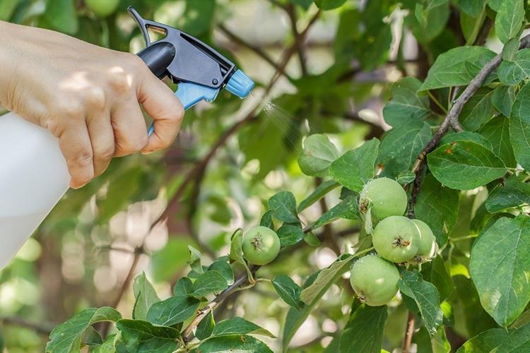 Обработка деревьев химическими инсектицидами
