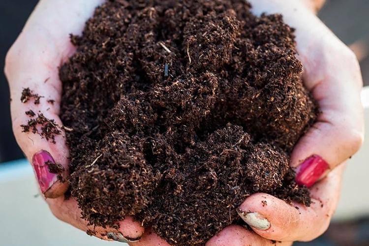 Перегной в почву для боярышника