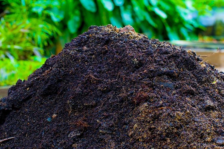 Навоз в почву для боярышника