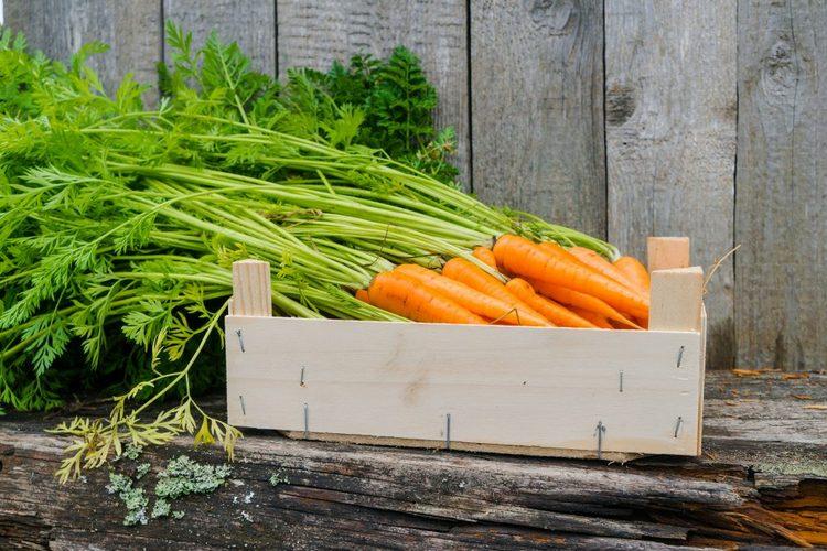 как сохранить морковку