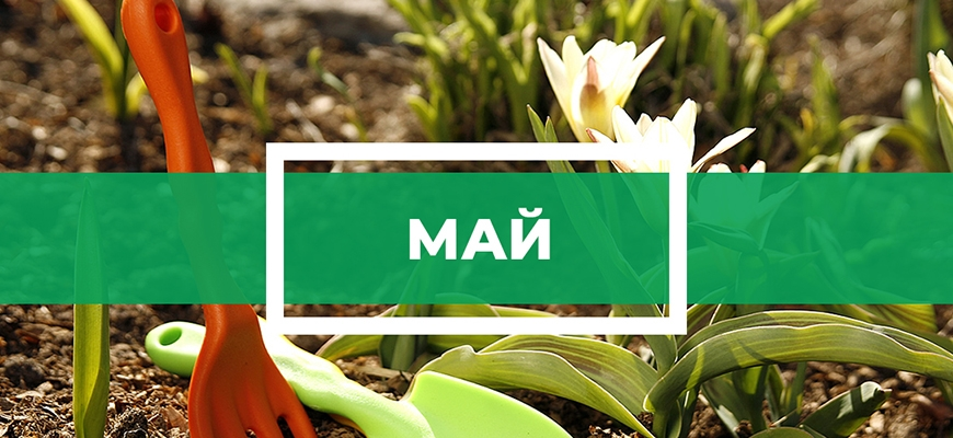 Календарь огородника на май
