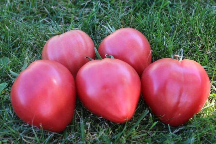 томаты орлиного сердца