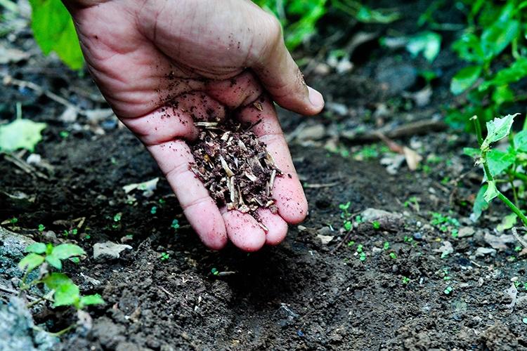 Подготовка почвы к посадке груши