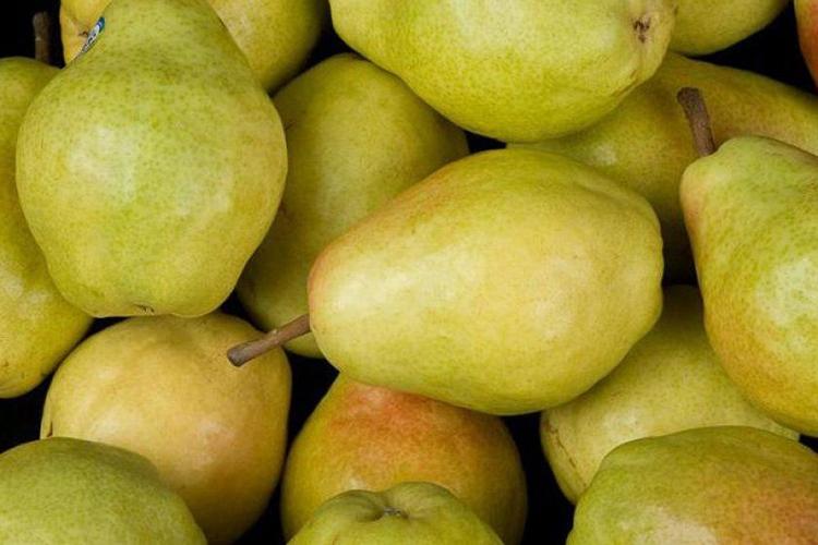 Груша Велеса - плоды