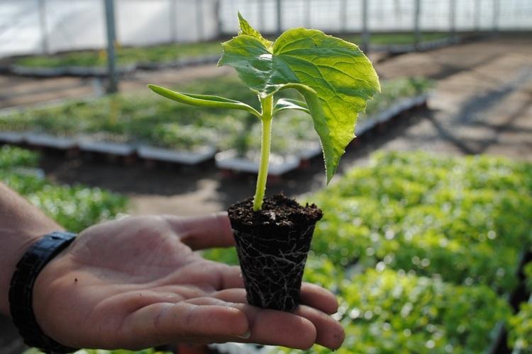 подросшее растение