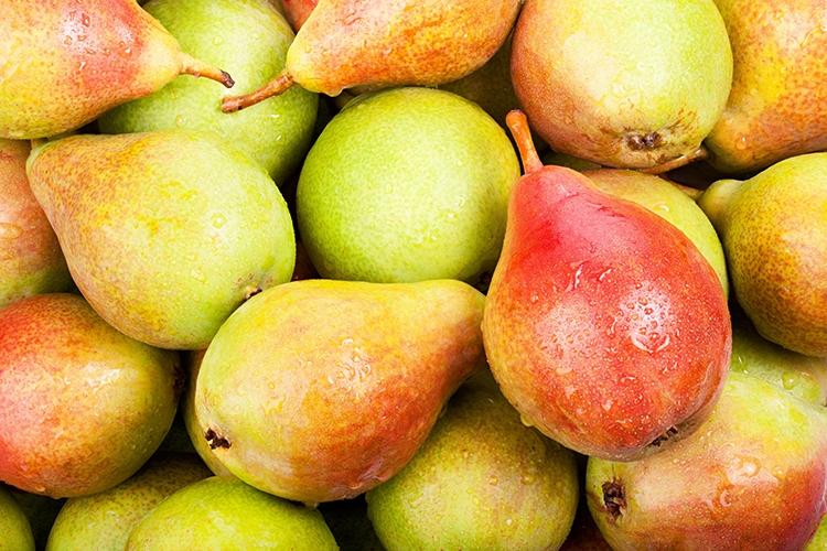 Плоды груши Бере Московская