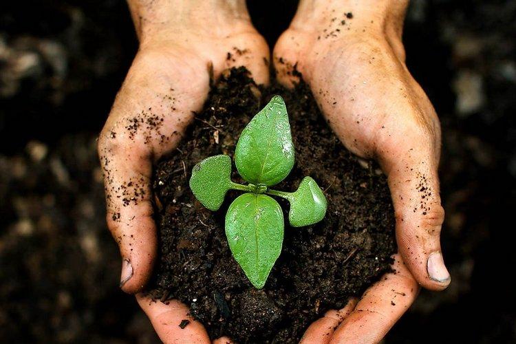 Торф как удобрение: способы использования для растений