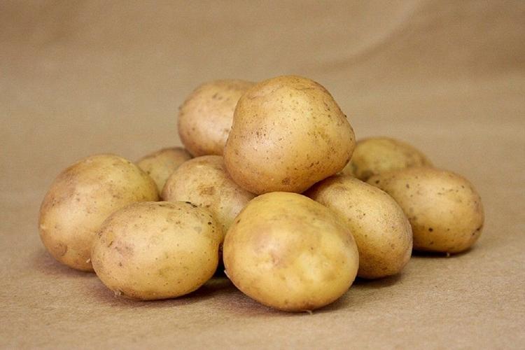 сорта картофеля фото описание очень разваристый рамках