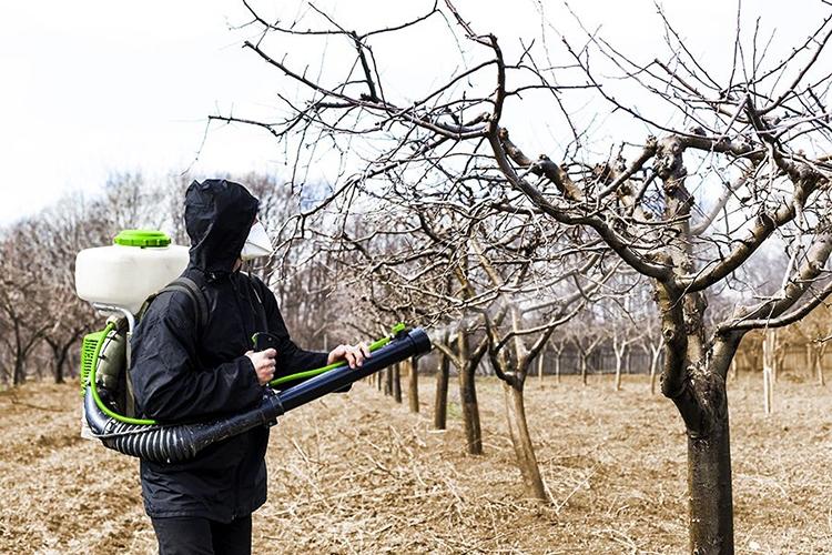 Первое опрыскивание деревьев весной
