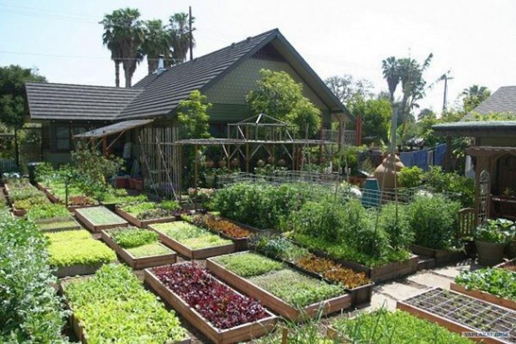 примерная планировка огорода