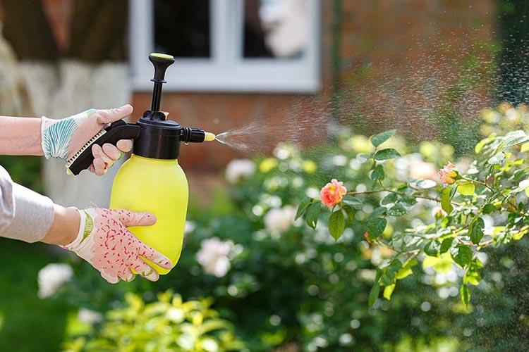 вВнекорневая подкормка роз