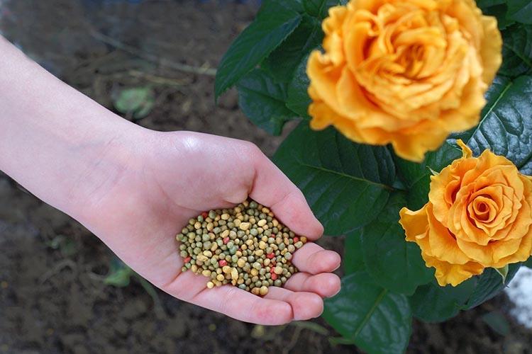 Комплексная подкормка роз