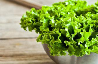 Как сохранить листья салата на зиму в домашних условиях