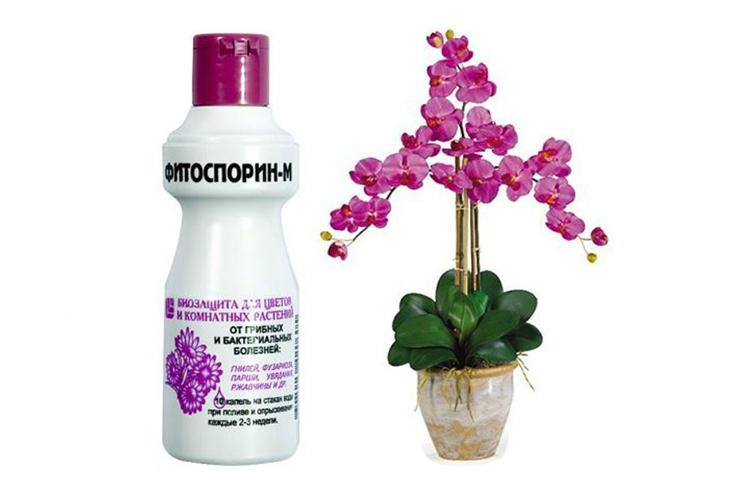 Фитоспорин для орхидей