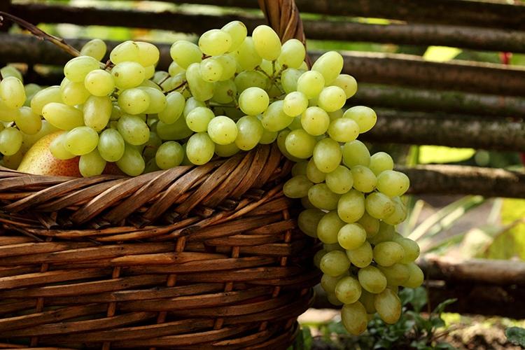 Популярные сорта белого винограда