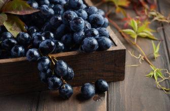 Популярные сорта черного винограда