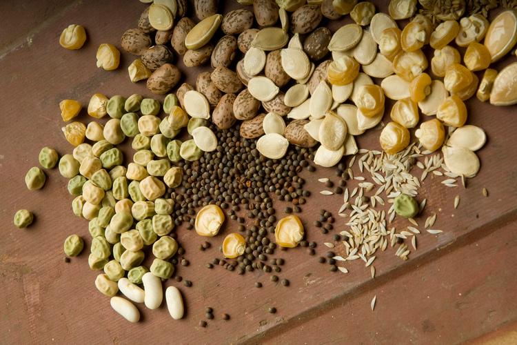 как подготовить семена к посадке