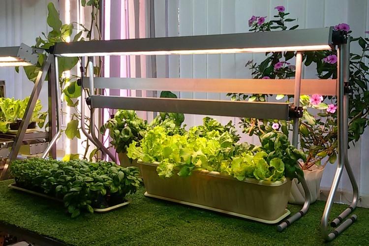 как подсвечивать растения