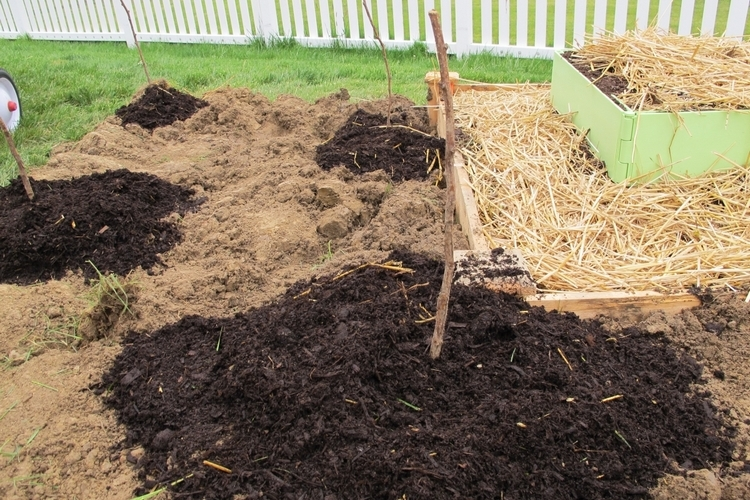 подготовка почвы и посадка кустом