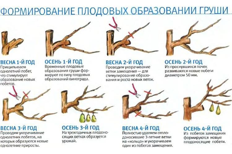 принципы удаления ветвей
