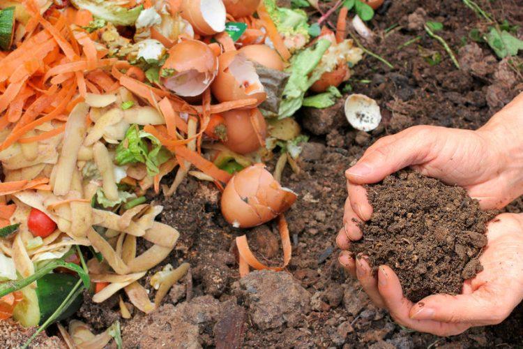 Из чего делают биогумус