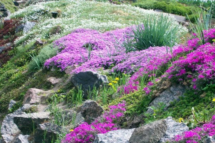 естественность альпинария