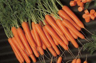 Морковь Амстердамская
