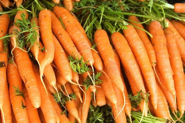 Урожай моркови Амстердамская