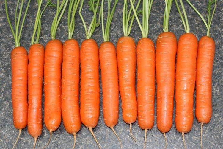 Плоды моркови Тушон