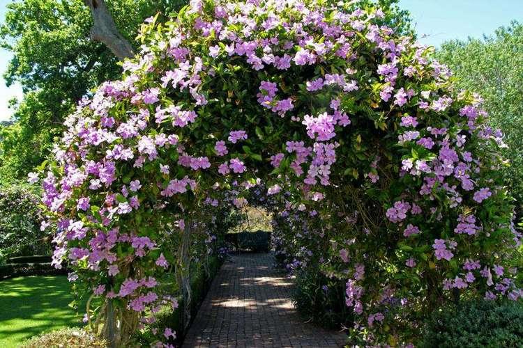 обустройство садовой арки с клематисами