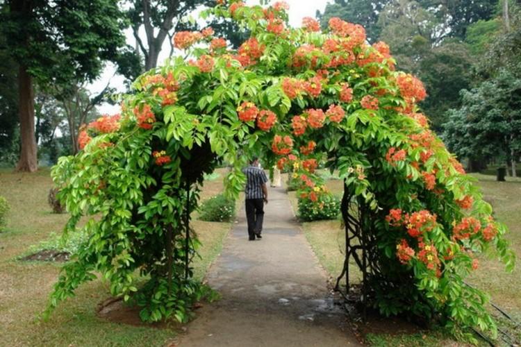 украшение садовой арки