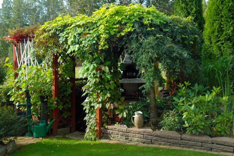 декорирование дачи растениями
