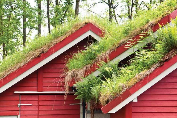 газон на покатой крыше