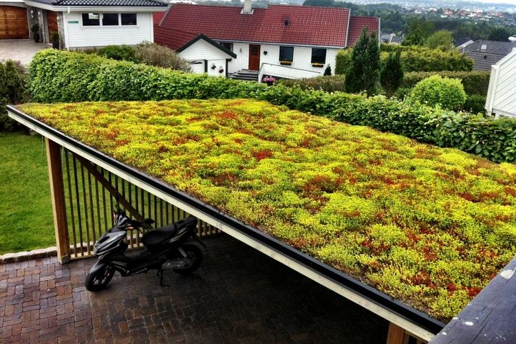 озеленение крыши навеса