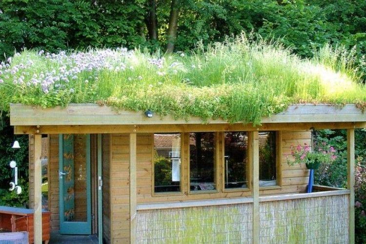 как посадить траву на крыше сарая