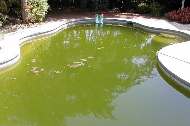 бассейн до очистки